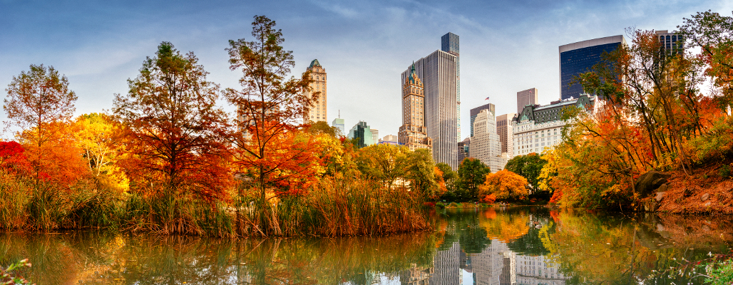 A skyline view with Autumn leaves from Central Park in New York