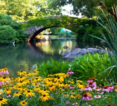 Central Park Conservancy Bloom Guide 1