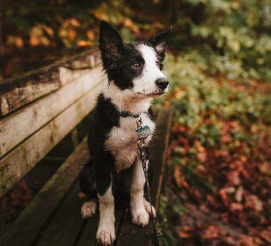 De Witt Clinton Park Dog Run