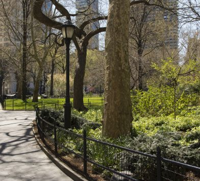 Weekly Walks with Central Park Conservancy